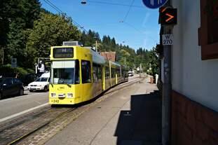 Der Düwag GT8Z TW 242 am 24.06.2019 in der Schauinslandstraße in Günterstal.