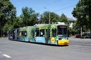 Straßenbahn Mainz: Adtranz GT6M-ZR der MVG Mainz - Wagen 213, aufgenommen im Mai 2020 an der Haltestelle  Goethestraße  in Mainz.